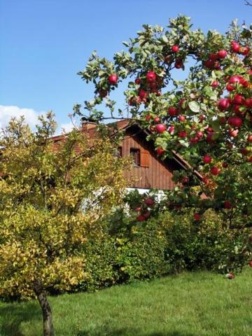 Rhönferienhaus Link - Obstgarten